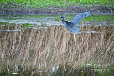 Photograph - Floating In Flight by Carol Groenen