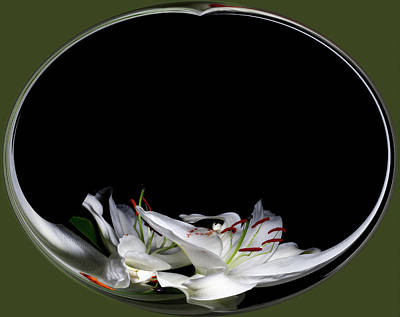 Digital Art - Floating Lily by Cyndy Doty