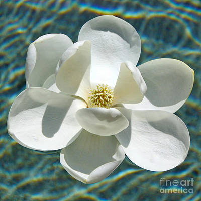 Photograph - Floating Magnolia Square by Carol Groenen