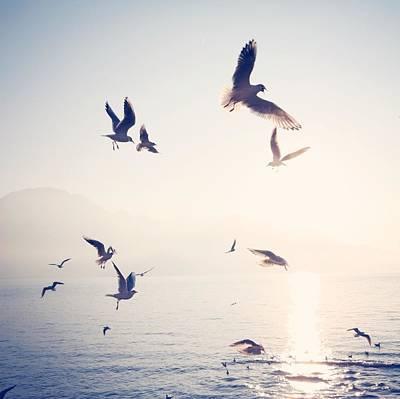 Flock Of Birds Flying Over Sea On Sunny Art Print by Toni Barth / Eyeem