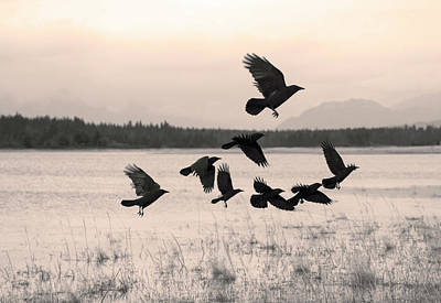 Olympic Sports - Flock of crows moving on by Michele Cornelius