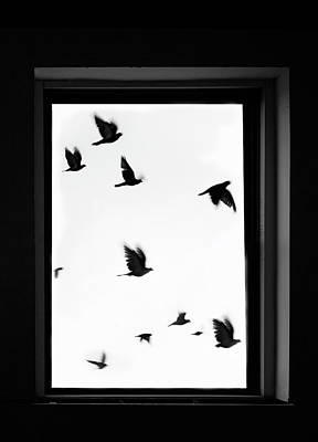 Photograph - Flock Of Crows Seen Through A Window by Grant Faint