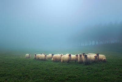 Photograph - Flock Of Sheep  by Mikel Martinez de Osaba
