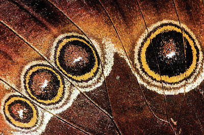 Insect Photograph - Flora And Fauna Shoots by Digital Camera Magazine