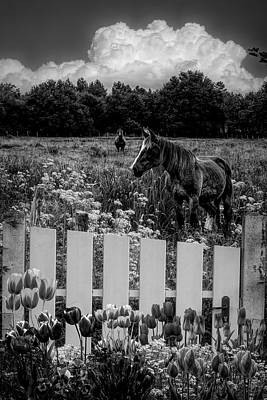 Photograph - Floral Farmland In Black And White by Debra and Dave Vanderlaan
