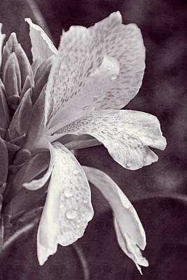 Photograph - Floral Memories I by Leda Robertson