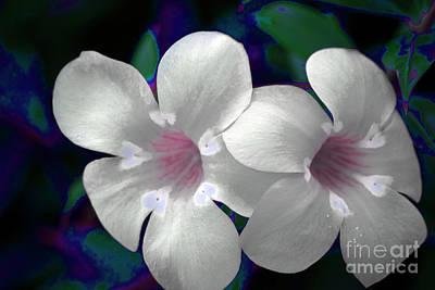 Photograph - Floral Photo A030119 by Mas Art Studio