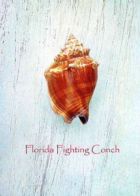 Photograph - Florida Fighting Conch by Kathi Mirto