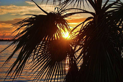 Photograph - Florida Palm Sunset by HH Photography of Florida