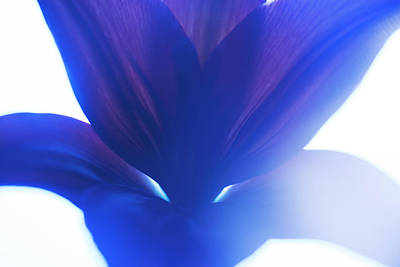Photograph - Flower Abstract #1, 2013 by Chris Hunt