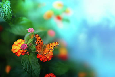 Flower Background With Butterfly Art Print by O-che