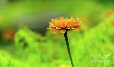 Photograph - Flower by Dheeraj Mutha