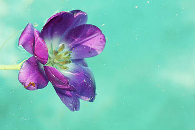 Digital Art - Flower Floating In Water by April Bauknight