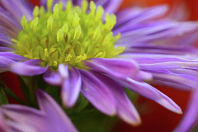 Photograph - Flower In Close by Jeffrey PERKINS