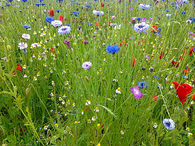 Photograph - Flower Meadow by Elizabeth Lock