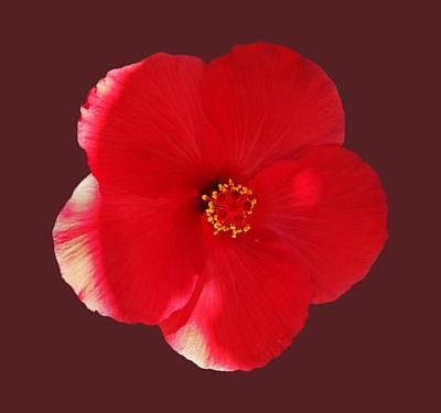 Photograph - Flower Power by Charles Stuart