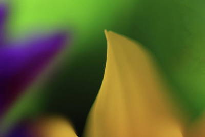 Photograph - Flower Tips In Abstract 2 by Jeffrey PERKINS