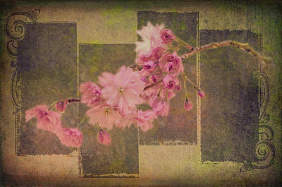 Photograph - Romantic Blossoms 8 by Marilyn Wilson