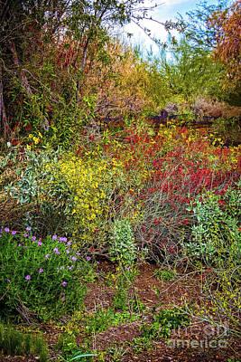 Photograph - Flowering Desert by Jon Burch Photography