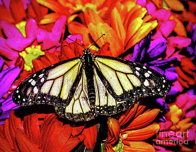Photograph - Flowers And Butterfly by Nick Zelinsky