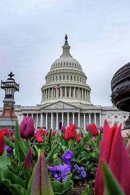 Photograph - Flowers And The Capital Building by Doug Ash