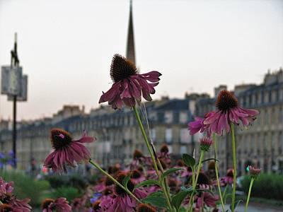 Flower Wall Art - Photograph - Flowers Bordeaux France 3 by Joan Stratton