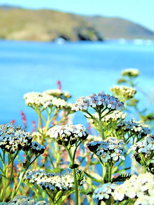 Photograph - Flowers In Greenland by Susan Lafleur