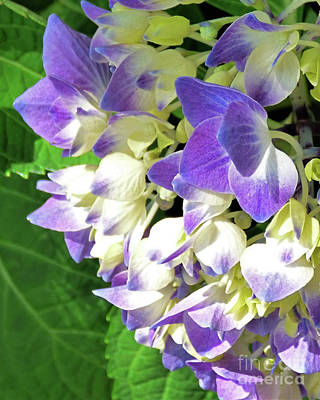 Pucker Up - Flowers on the Vine 300 by Sharon Williams Eng