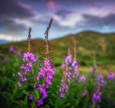 Royalty-Free and Rights-Managed Images - Flowery Sunset by Darren White