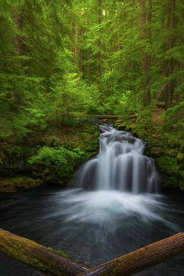 Royalty-Free and Rights-Managed Images - Flowing Through the Forest by Darren White