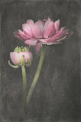 Wall Art - Mixed Media - Fluer D'armour Ranunculus I by Amanda Lakey