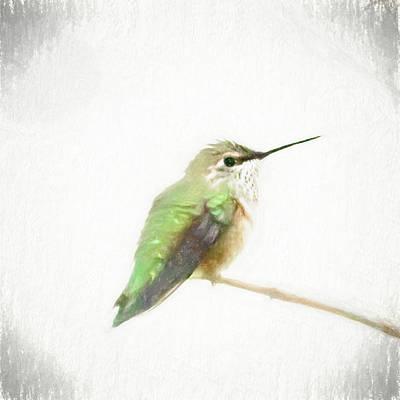 Photograph - Fluffy Hummingbird by Jennifer Grossnickle