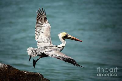 Photograph - Fly Away by Sabrina L Ryan