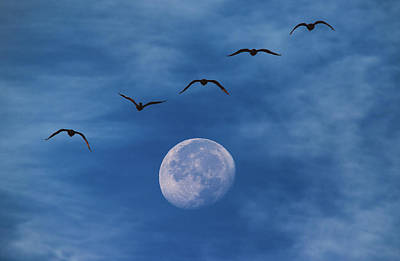 Royalty-Free and Rights-Managed Images - Fly Me to the Moon by Darren White