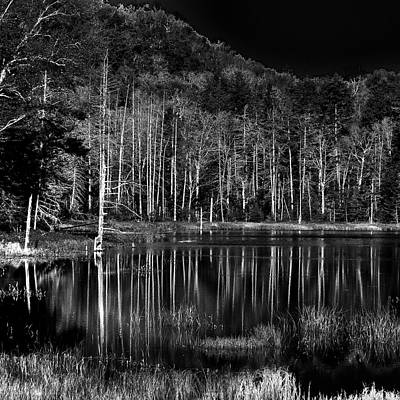 Art Print featuring the photograph Fly Pond Reflection by David Patterson