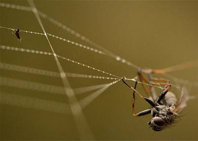Antlers - Said the Spider to the Fly by Kristine Patti