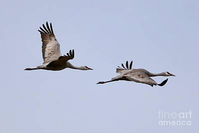 Photograph - Fly With Two Sandhills by Carol Groenen