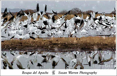 Photograph - Fly With Your Flock by Susan Warren