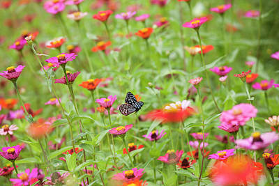 Photograph - Flying Butterfly In A Beautiful Meadow by Enviromantic