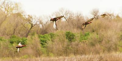Nirvana - Flying Ducks by Richard Balison