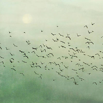 Photograph - Flying Flock Of Birds by Laura Ruth