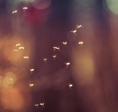 Photograph - Flying Insects by Dan Sproul