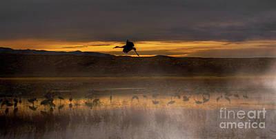 Flying Over Crane Pond Art Print