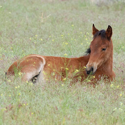 Photograph - Foal In The Flowers by Mary Hone