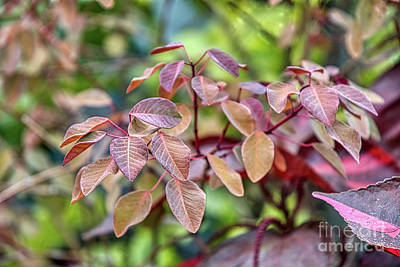 Photograph - Focus On Leaves by Amy Dundon