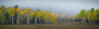 Photograph - Aspens In The Fog by Richard Raul Photography