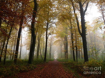 Photograph - Foggy Autumn Forest by Eva Lechner