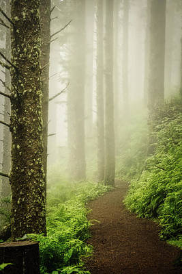 Photograph - Foggy Cape Meares Trail - Oregon by Stuart Litoff