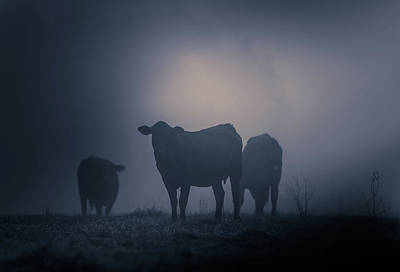 Photograph - Foggy Cattle by Dan Sproul
