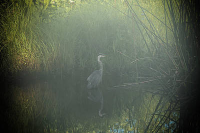Photograph - Foggy Morning by CK Brown